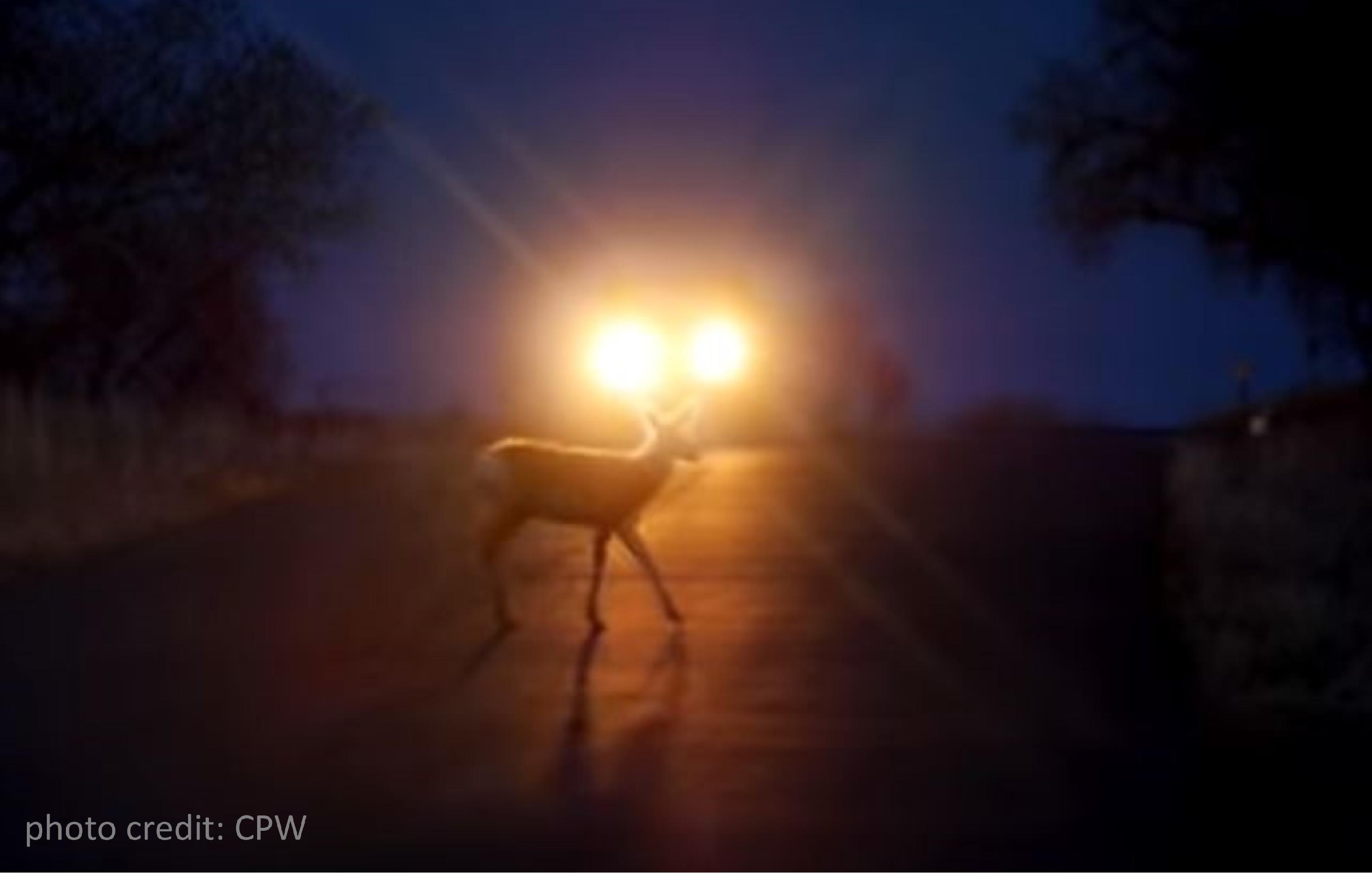 Wildlife on the Move 4
