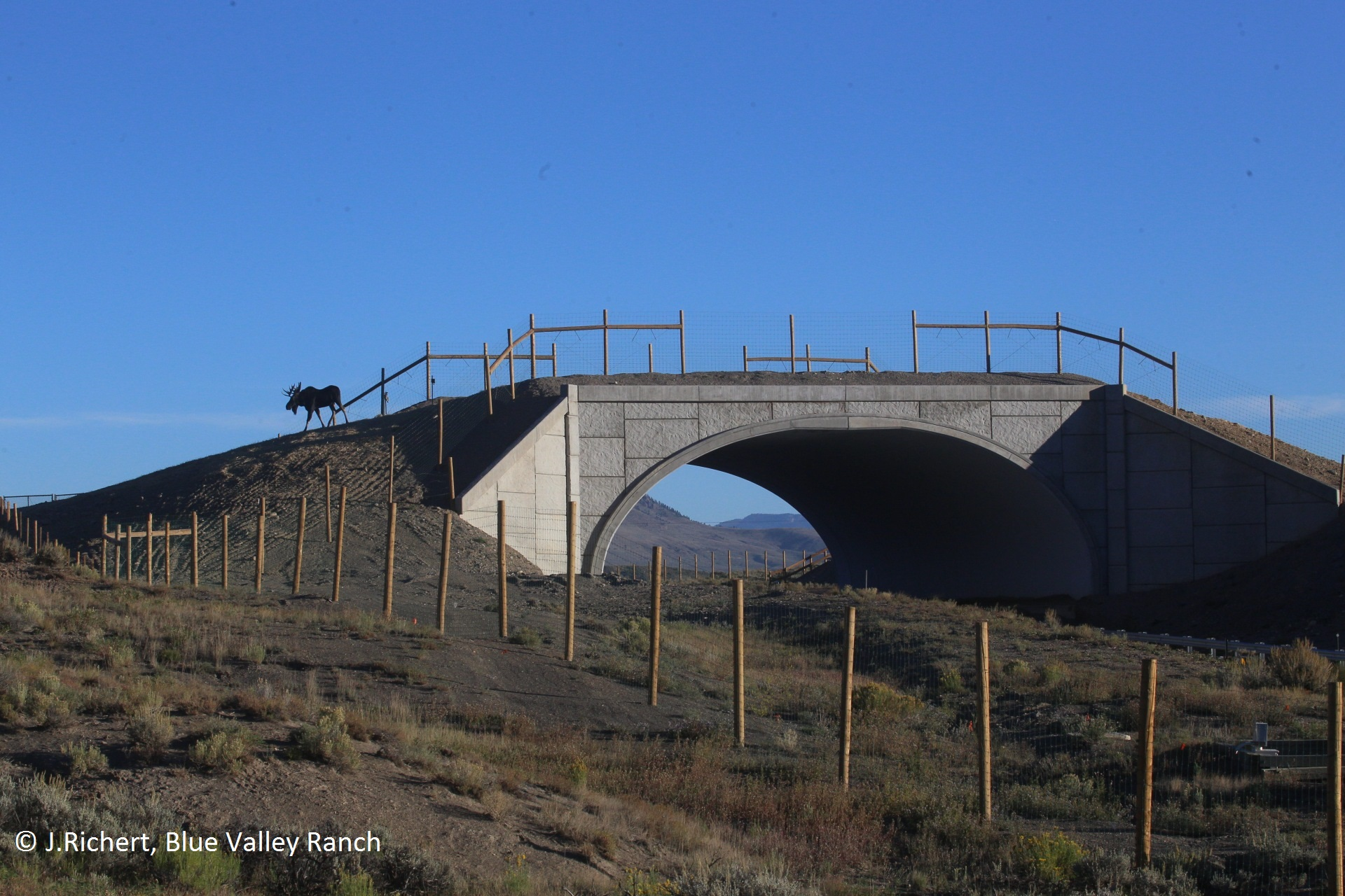 CO 9 moose crossing overpass
