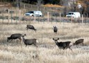 US 550_SW CO_Deer Fence_050 (1).jpg