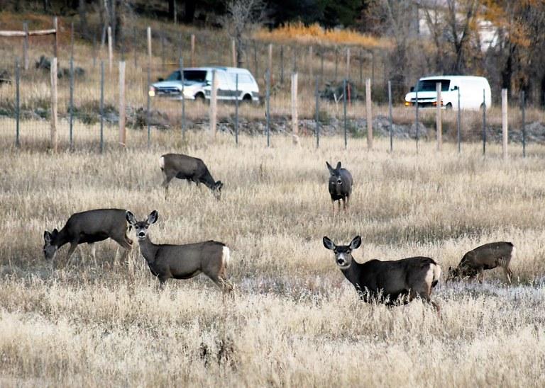 US 550 SW Colorado Deer Fence