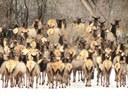 Photo courtesy of  Dan Bender, La Plata County Sheriff's Office thumbnail image