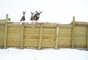 Photo courtesy of Colorado Dept. of Transportation, Colorado Parks and Wildlife & ECO-resolutions thumbnail image
